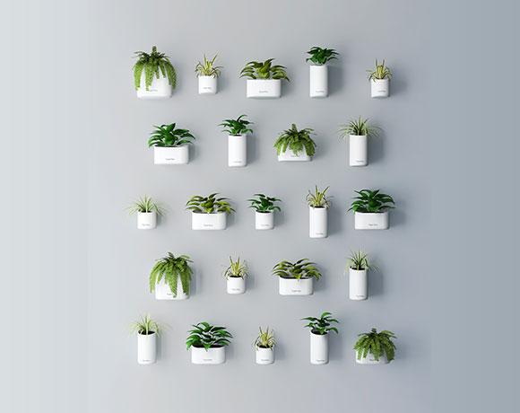 Urban Wall Garden